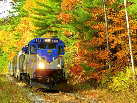 Nature, Mode of transport, Transport, Track, Branch, Railway, Leaf, Rolling stock, Tree, Locomotive,