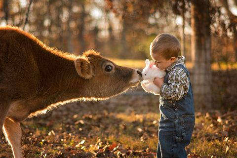 Human, Mammal, People in nature, Adaptation, Interaction, Terrestrial animal, Fawn, Snout, Toddler, Grazing,