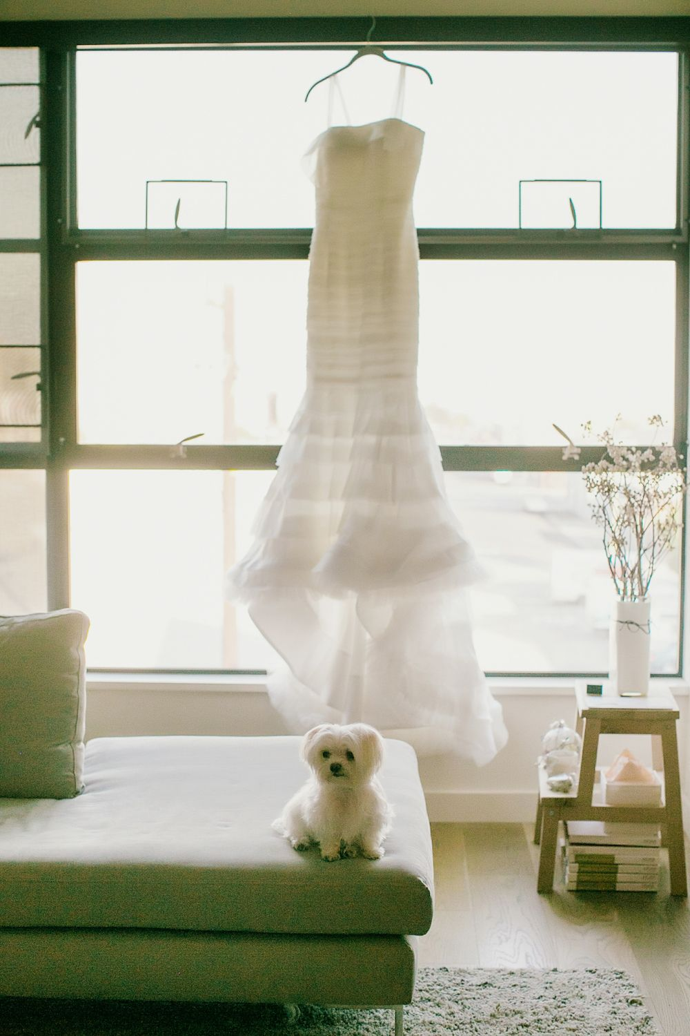 Dogs at Weddings - How to Include Your Dog in Your Wedding