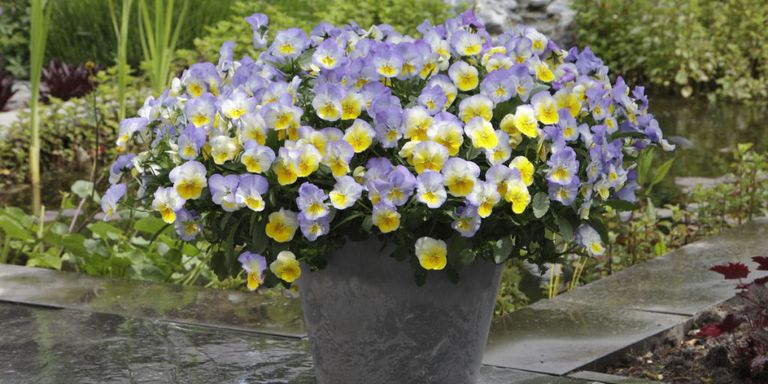 10 container gardening ideas best plants for containers for Best plants for container gardening