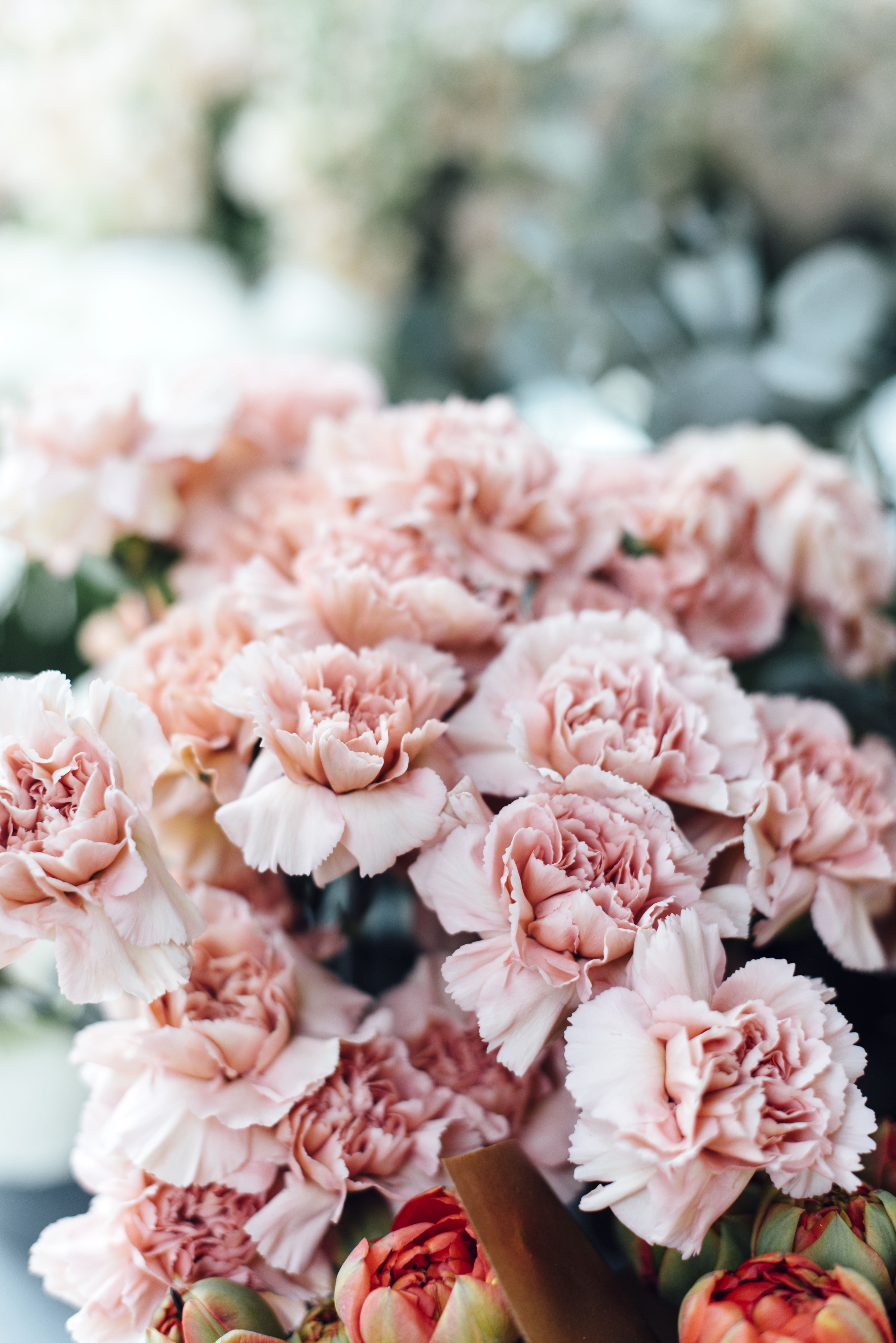 6 reasons to bring back the carnation why carnations should make a 6 reasons to bring back the carnation why carnations should make a comeback izmirmasajfo