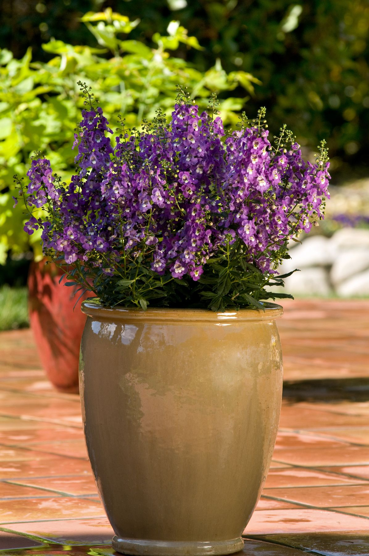 image & 10 Container Gardening Ideas - Best Plants for Containers