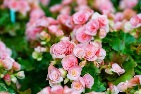 Flower, Petal, Pink, Botany, Flowering plant, Spring, Groundcover, Peach, Bud, Herbaceous plant,
