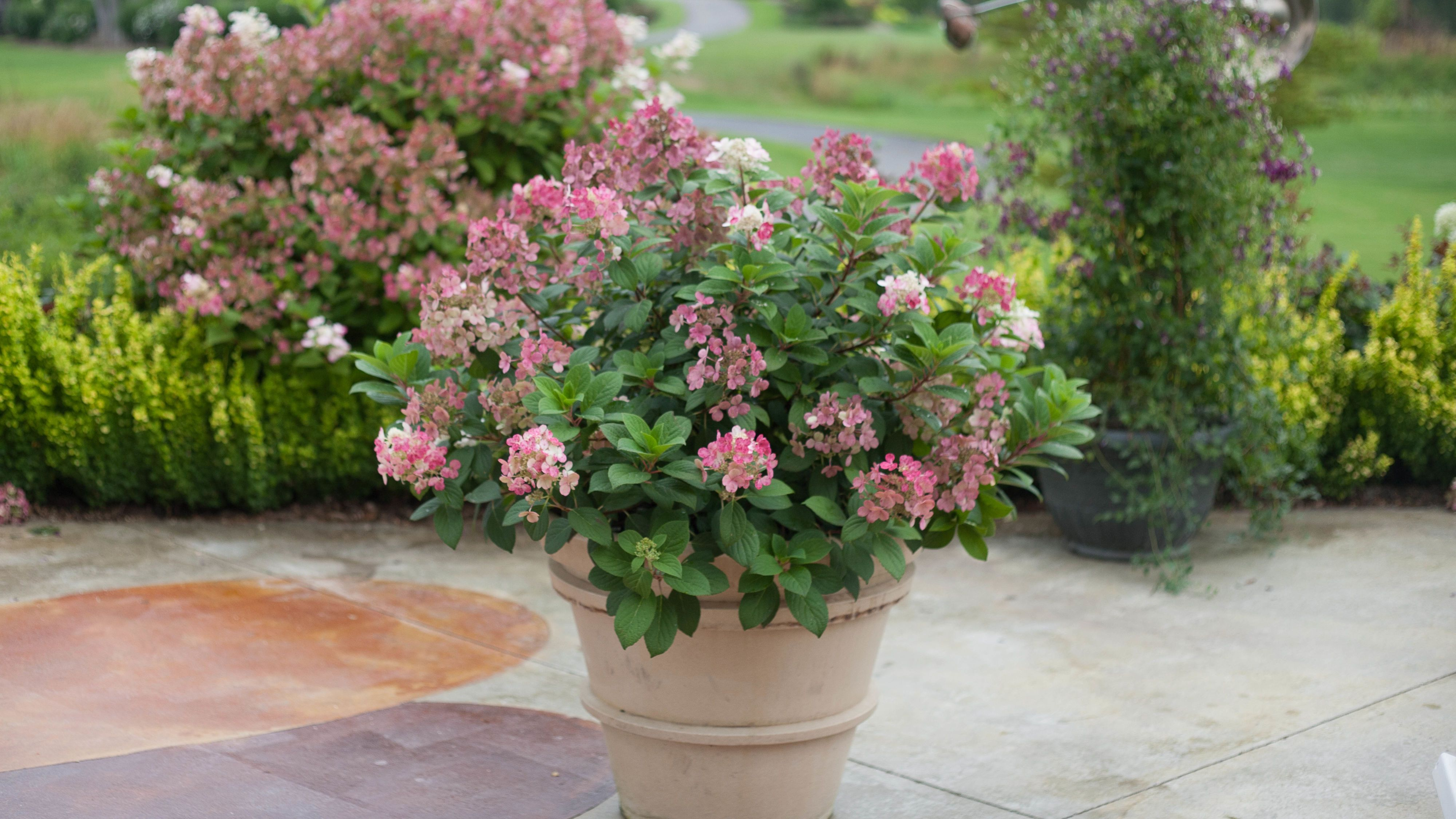Country Living Magazine & 10 Container Gardening Ideas - Best Plants for Containers