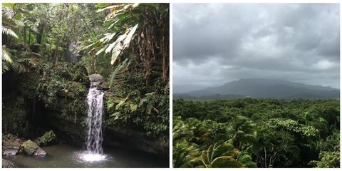 The only tropical rainforest in the U.S.