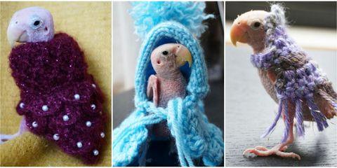 rhea the naked bird sweaters