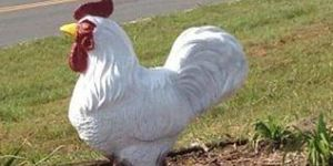 rooster statue stolen from North Carolina farm
