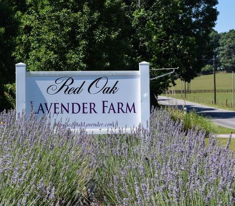 red oak lavender farm georgia