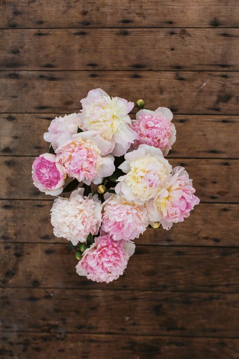 how to care for cut peonies