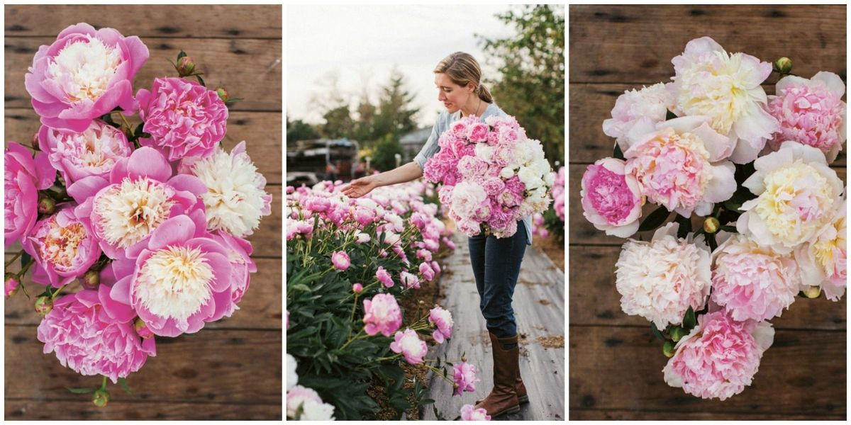 "Why Peonies Are the ""Ultimate Queen of Spring"" Flower"