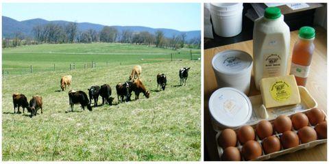 Natural landscape, Pasture, Farm, Plastic bottle, Landscape, Bottle, Plain, Grassland, Grazing, Ranch,