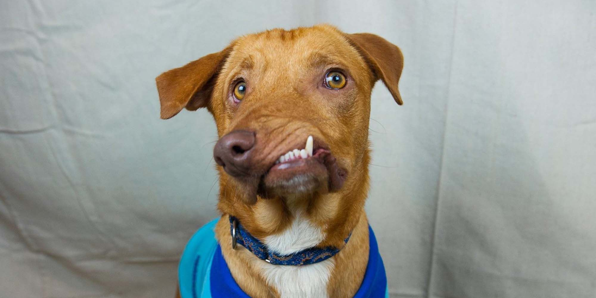 this sweet dog was abandoned due to his deformed face