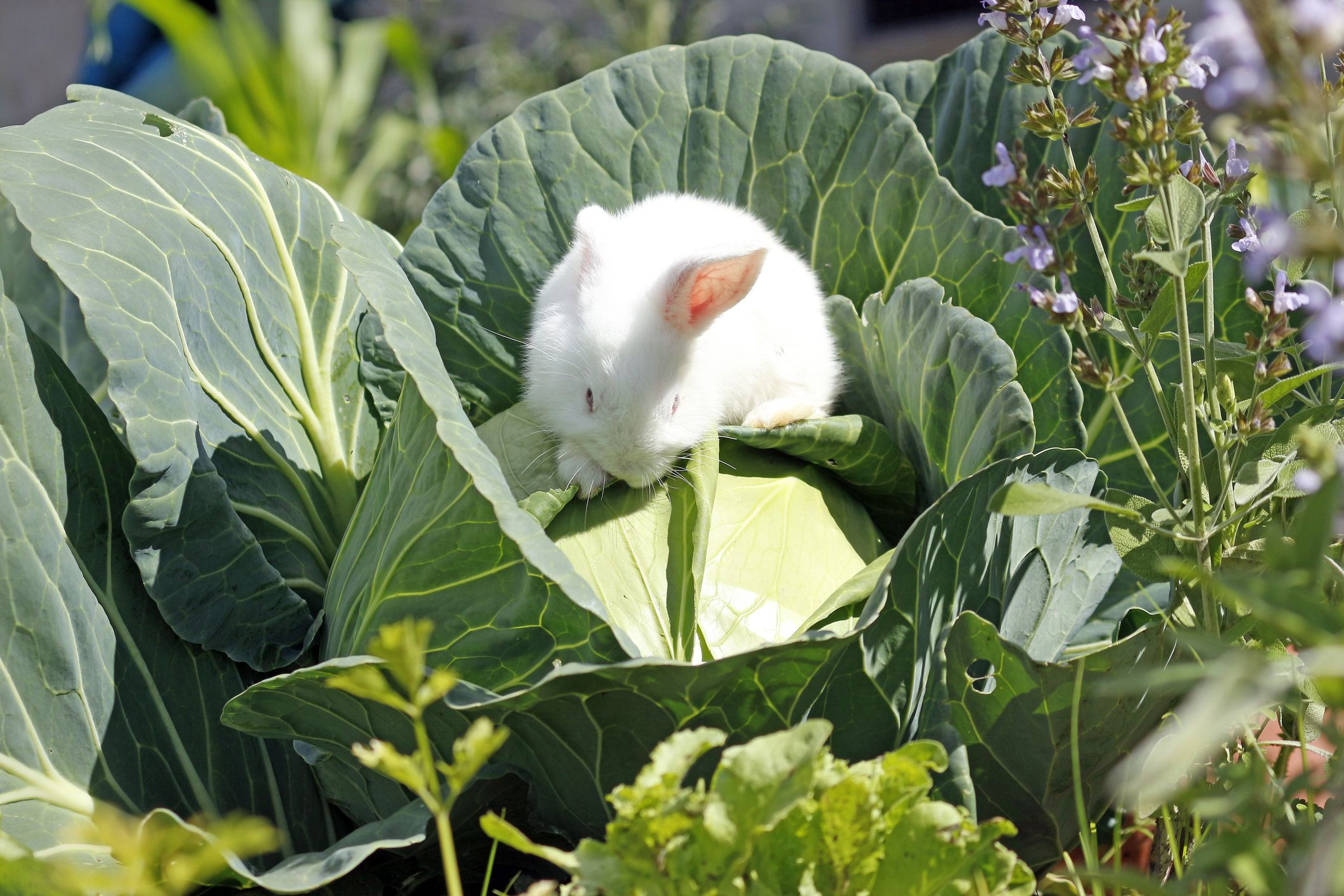 clean bc garden for and gardening img seed keep out birds of volcanoes guerilla canada surrey