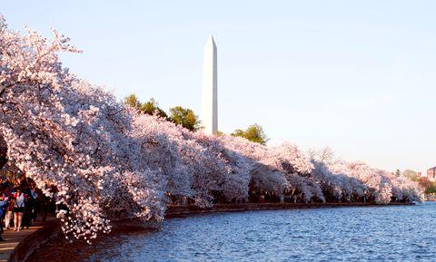 Obelisk, Bank, Lake, Spring, Blossom, Shrub, Calm, National monument, Cherry blossom, Monument,