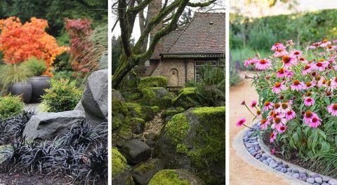 Plant, Petal, Shrub, Landscape, Flower, Garden, Leaf, House, Rock, Botany,