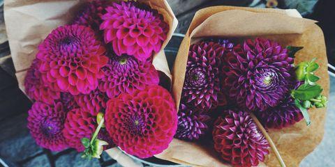 Flower farm CSAs