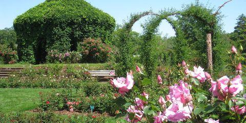 Rose garden Hartford, Connecticut