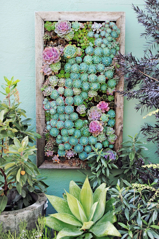 Succulent Tray Vertical Garden