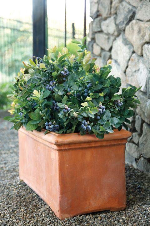 Plant, Flowerpot, Leaf, Shrub, Stone wall, Annual plant, Houseplant, Subshrub, Herbaceous plant, Herb,