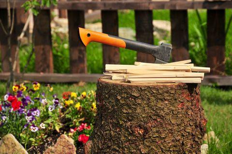 Tree, Tree stump, Spring, Plant, Garden, Trunk, Axe, Wood, Landscape, Woodland,