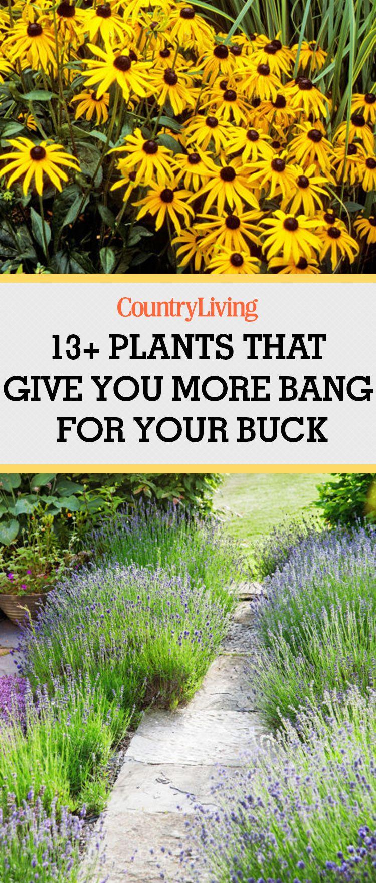 15 Easy Garden Plants To Grow - Cheap Hardy Plant Ideas
