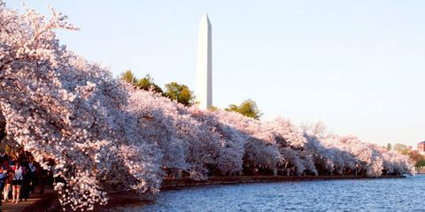 Obelisk, Daytime, Bank, Blossom, Lake, Spring, Shrub, Calm, National monument, Cherry blossom,