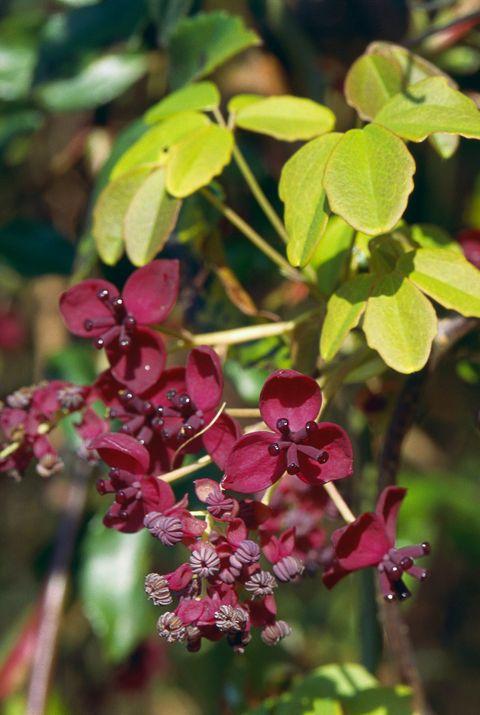 20 Best Flowering Vines And Vine Plants Best Wall Climbing Vines