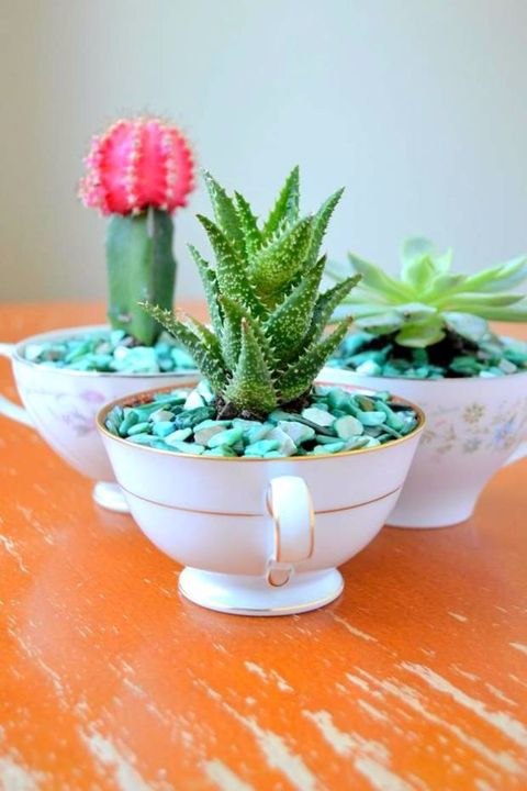 Cactus, Flowerpot, Houseplant, Plant, Flower, Pink, Botany, Terrestrial plant, Succulent plant, Leaf,