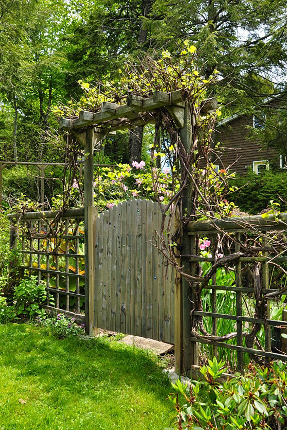 Grape Vine Garden Gate
