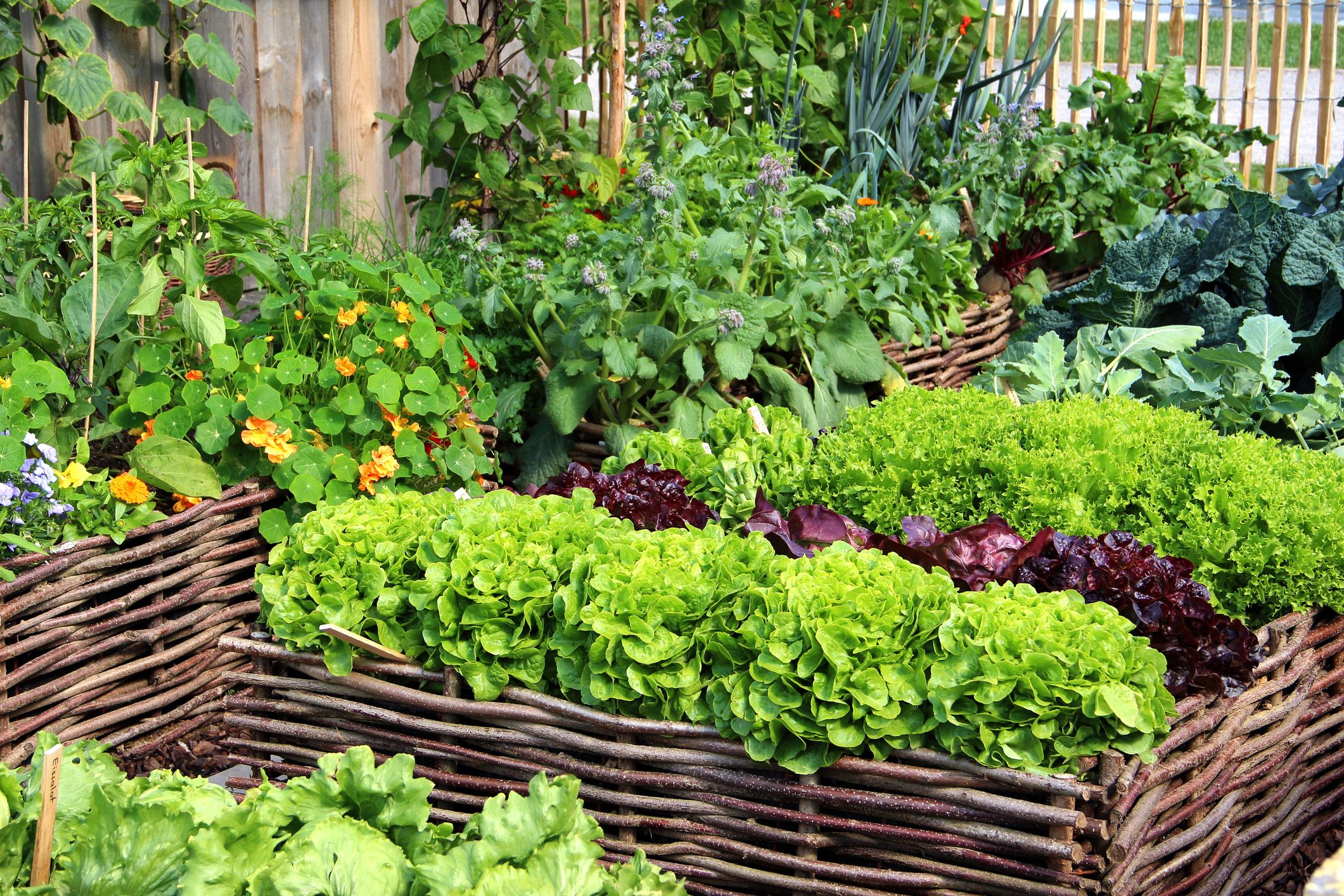 Awesome How to Plant Vegetables