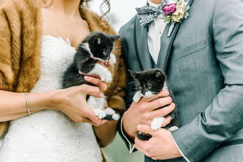 Cat, Skin, Felidae, Small to medium-sized cats, Kitten, Hand, Fur, Carnivore, Norwegian forest cat, Nail,