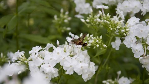 10 most fragrant outdoor flowers best smelling plants for garden image mightylinksfo