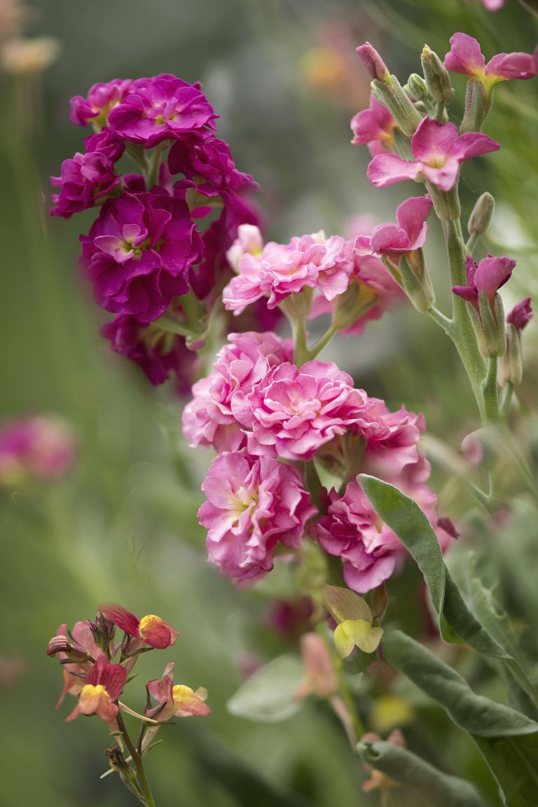 10 Most Fragrant Outdoor Flowers