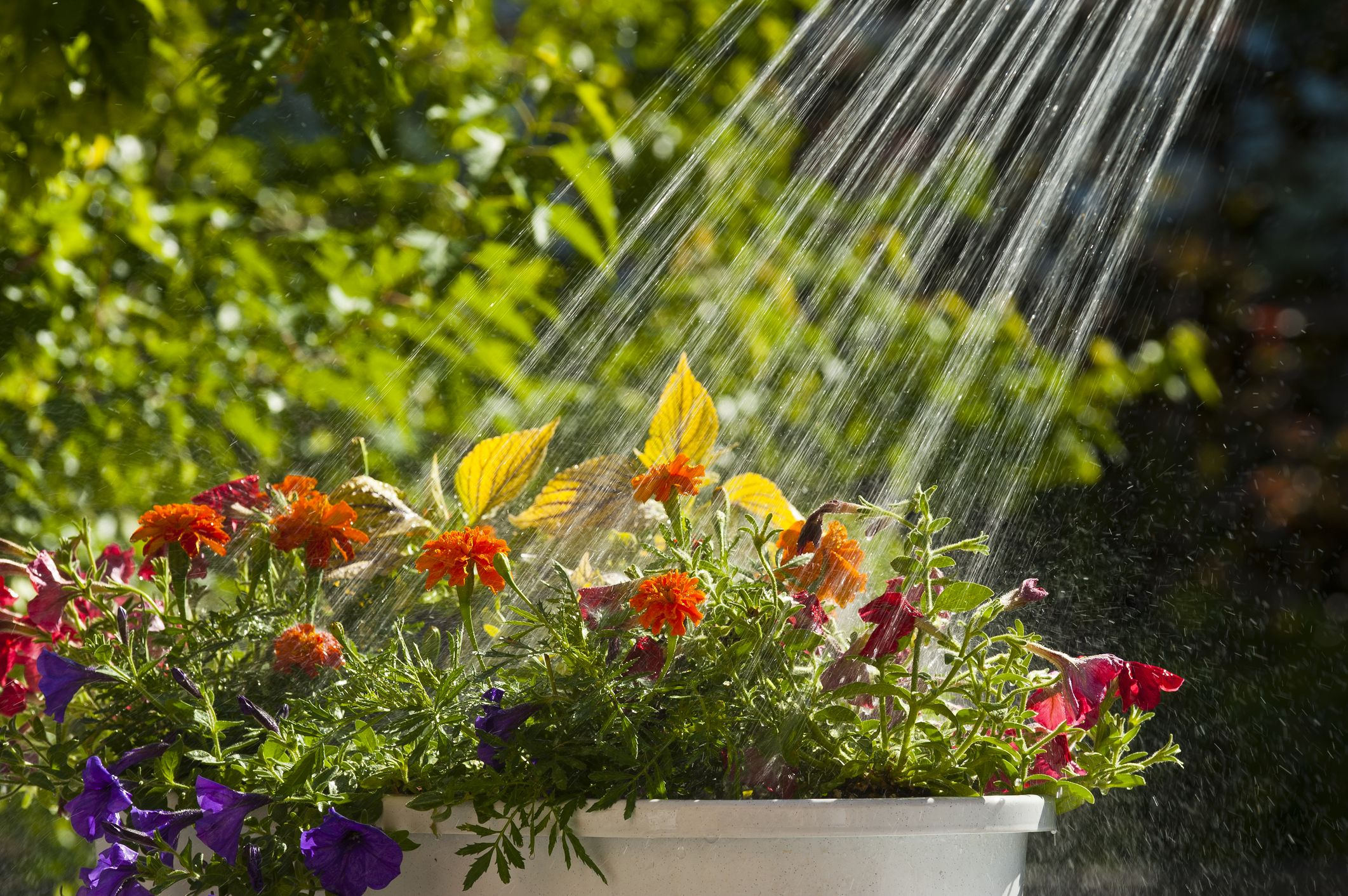 Gardening and Landscaping Mistakes - Landscaping and Backyard Ideas