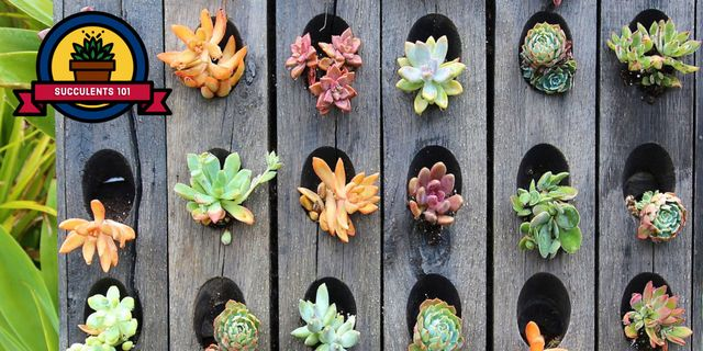 Growing And Planting Succulents