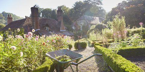 Wheelbarrow, Plant, Shrub, Garden, Cart, Groundcover, Hedge, Yard, Garden tool, Backyard,