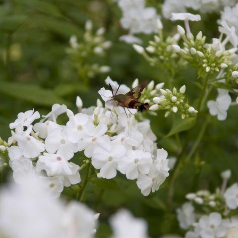 Best Smelling Plants For Garden