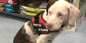 blind and deaf therapy dog