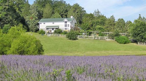 Plant, Purple, Tree, Lavender, Land lot, Agriculture, House, Shrub, Rural area, Garden,