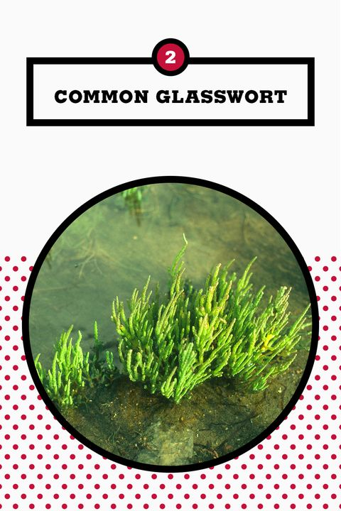 Grass, Vegetation, Plant, Grass family, Aquarium decor, Terrestrial plant, Hornwort, Aquatic plant, Chlorophyta, Non-vascular land plant,
