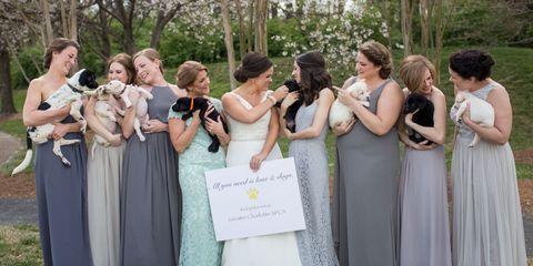 Puppy wedding bouquets