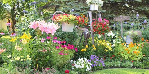 Shrub, Plant, Garden, Flower, Petal, Groundcover, Flowering plant, Wildflower, Landscaping, Spring,