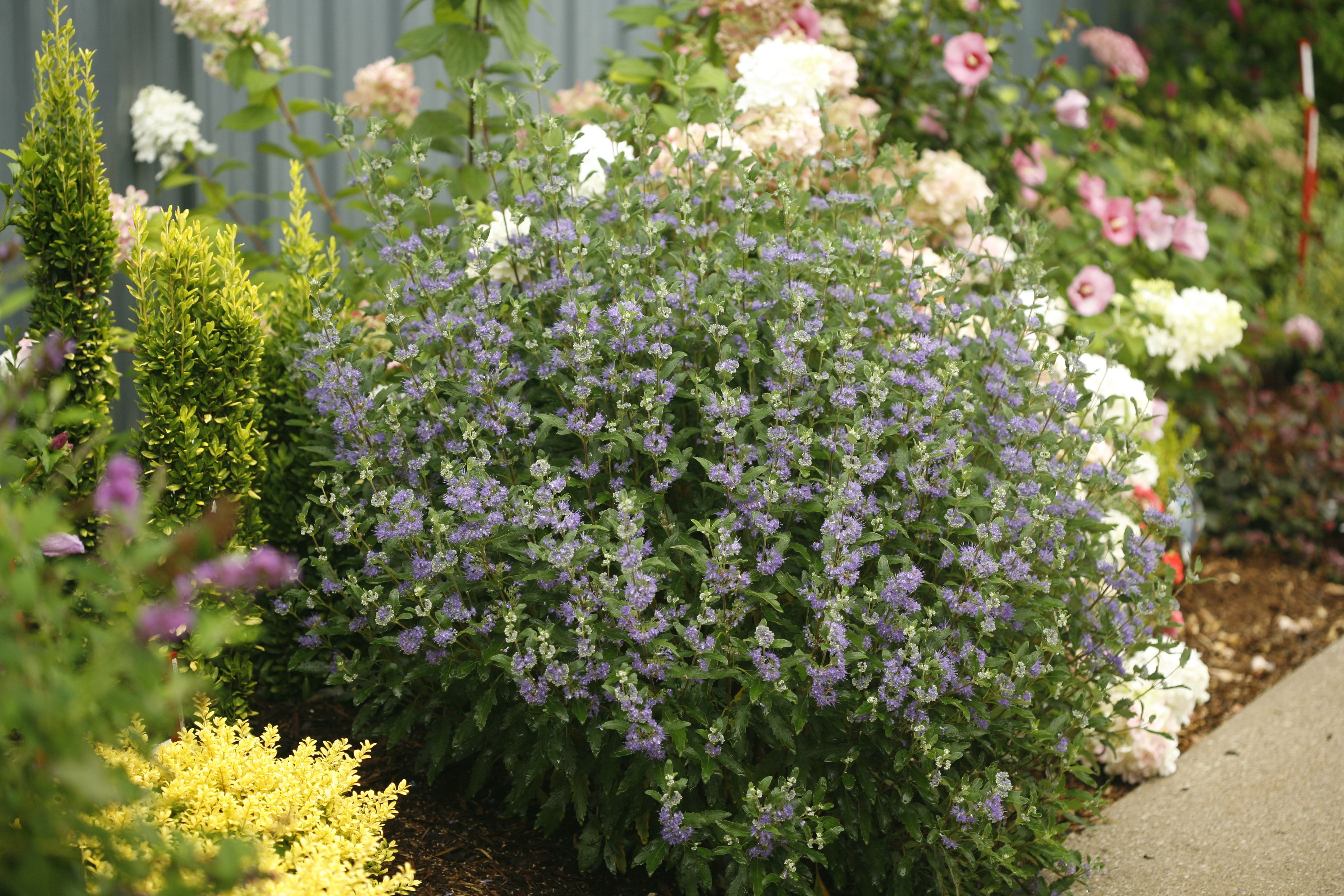Plants That Attract Bees - Pollinator Garden