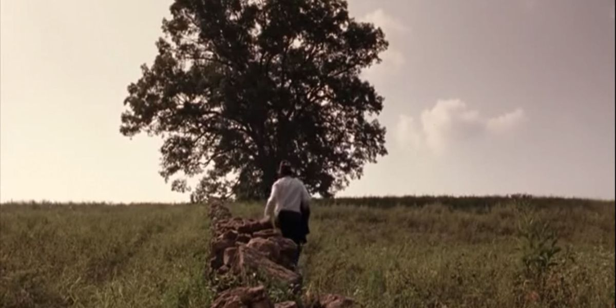 The Famous 200 Year Old Oak Tree From Shawshank