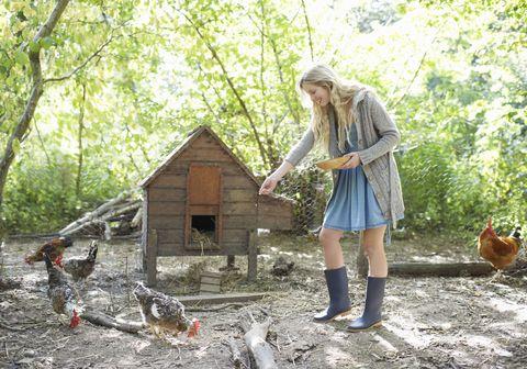 Chicken, Tree, Rooster, Galliformes, Adaptation, Chicken coop, Woodland, House, Plant, Bird,