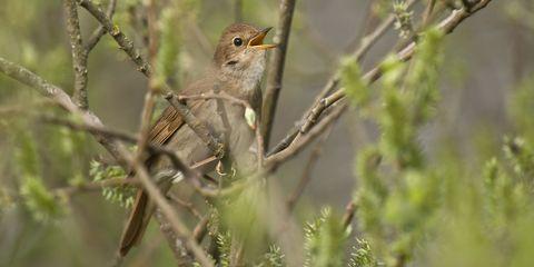 Branch, Brown, Bird, Beak, Twig, Adaptation, Biome, Morning, Wildlife, Terrestrial animal,