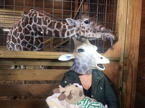 Giraffe, Giraffidae, Terrestrial animal, Snout, Fawn, Zoo, Wildlife,