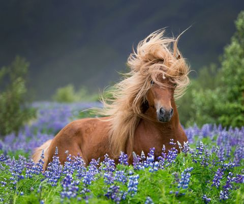 Horse with beautiful hair