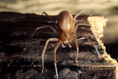 Insect, Invertebrate, Close-up, Wildlife, Pest, Organism, Macro photography, Arthropod, Terrestrial animal, Photography,