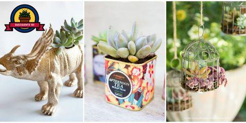 Plant, Cactus, Party favor, Flowerpot, Succulent plant, Flower, Houseplant, Easter, Label,
